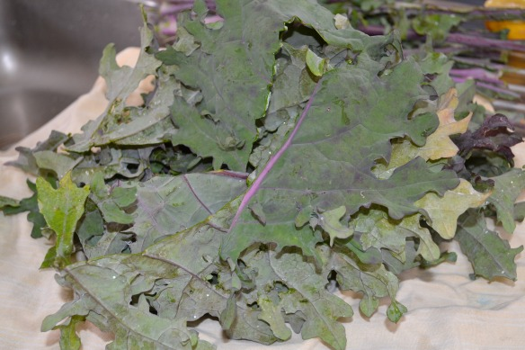 - Kale from our garden -